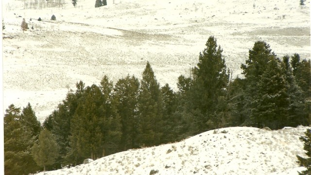 Lamar Valley with Wolves
