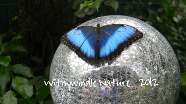 Blue Butterfly on Silver Globe